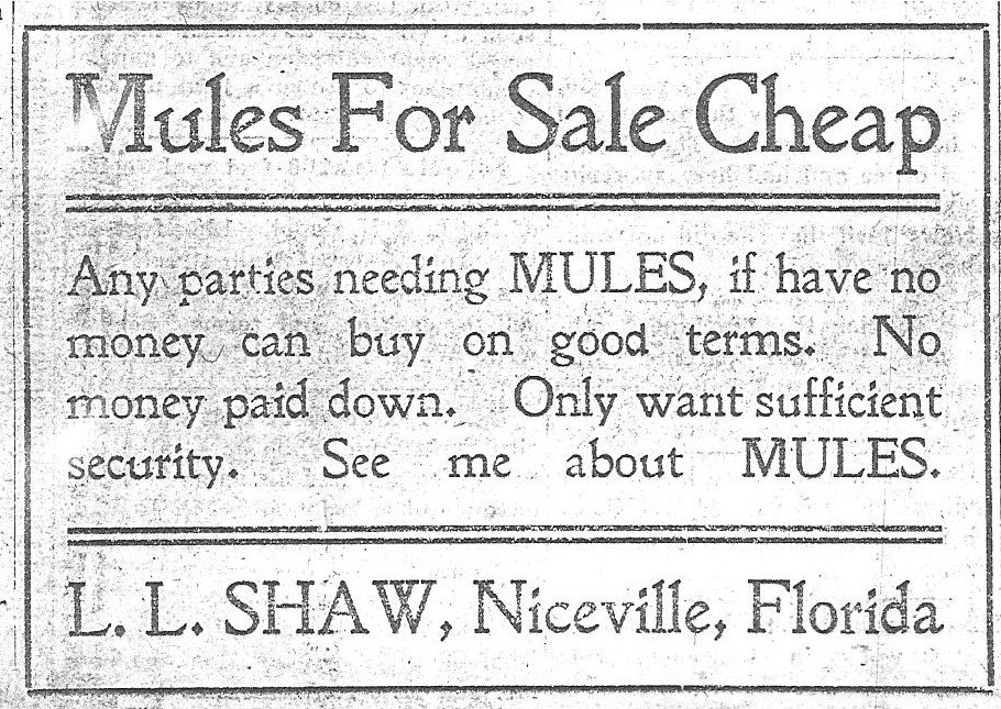 Mules For Sale: Niceville